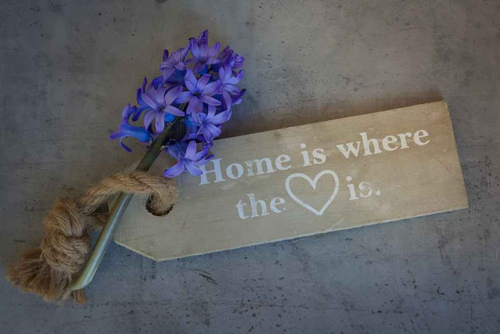 hyacinth-flower-flowers-blue-161001.jpeg